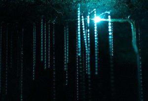Spellbound glowworm threads