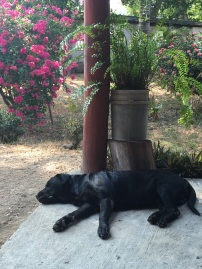 Sleepy puppy (one of many in CR)