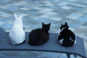 cats in positano