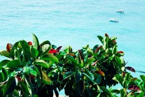 greenplantspositanoocean